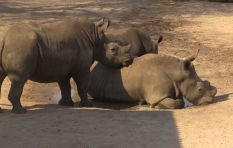 10% decline in rhinos poached in 2016 does not alleviate concern
