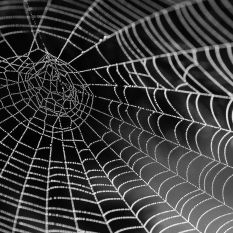 It's called the web. Is it any surprise we got caught in it?