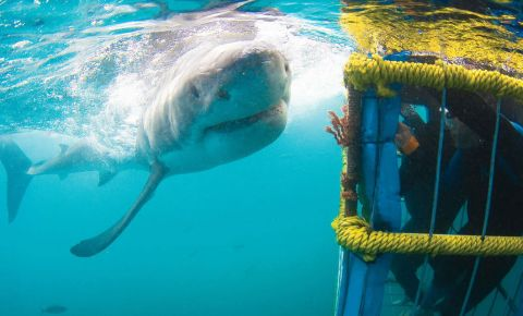 white-shark-diving-company-save-your-favesjpg