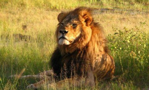 Cecil_the_lion-620x330.jpg