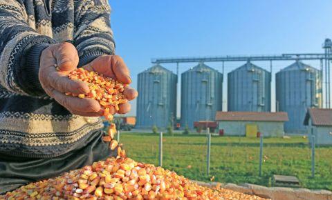 Maize mealie grain farmer harvest agriculture 123rfbusiness 123rf