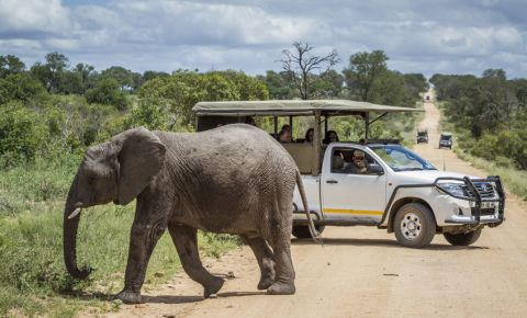 African-bush-elephant-safari-drive-tourism-Kruger-National-Park-Sanparks-123rf