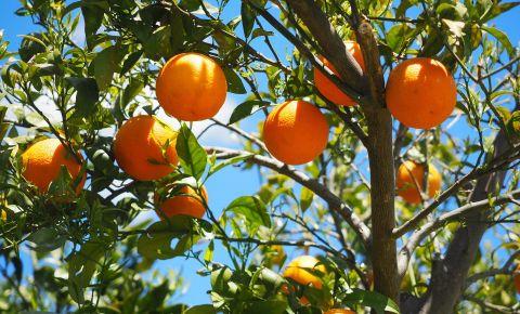 oranges-1117628-1920jpg