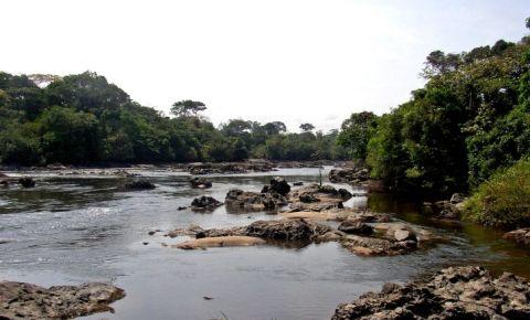 Okapi Congo.jpg