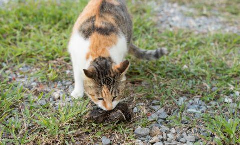 cat-eats-bird-domestic-pet-feline-prey-animal-wild-123rf
