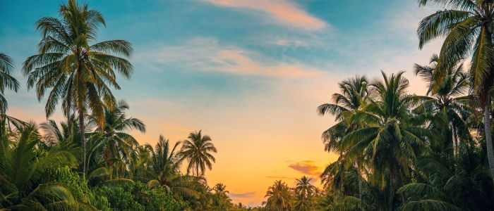 coconut-trees-dawn-daylight-1033729jpg
